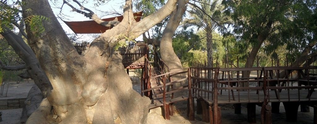 Terrace in the baobabs